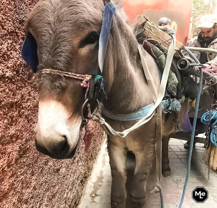 Marrakech travel report-ezel