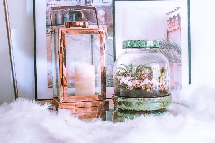 Plant-Rebelz-rude-solier-terrarium-1-8
