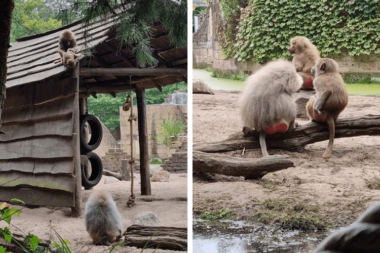 dierentuin makaken