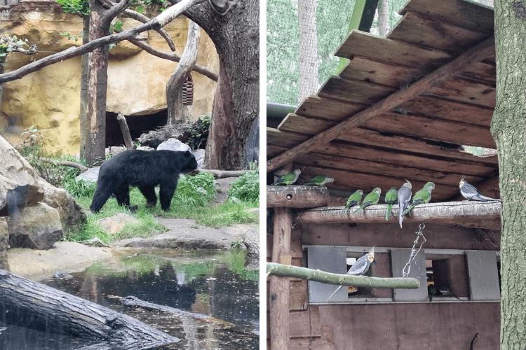 Dierentuin Amersfoort beren en parkieten