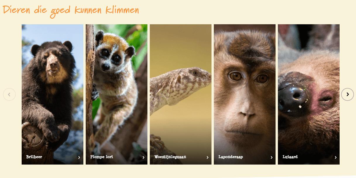 dieren die goed kunnen klimmen